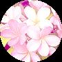 Profile picture of plumeria