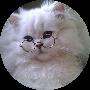 Profile picture of midnightcracker