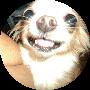Profile picture of SilentSnail