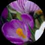 Profile picture of Desponia