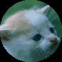 Profile picture of kittykatty