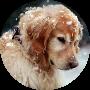 Profile picture of meera17817