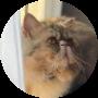 Profile picture of jinglebelle