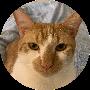 Profile picture of Momopeach