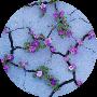 Profile picture of freshrumput