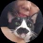 Profile picture of Tintel