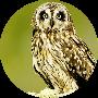 Profile picture of blktibetanquartz