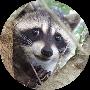 Profile picture of neoguri